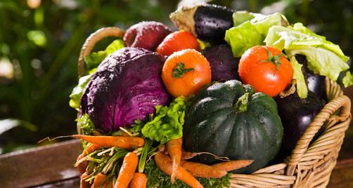 comida-organica